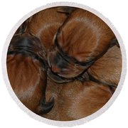 Round Beach Towel featuring the photograph Snuggle by Mim White