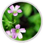 So Delicate In Purple. Texas Spring Perennial Round Beach Towel