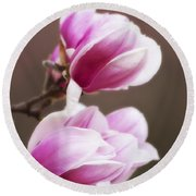 Soft Magnolia Blossoms Round Beach Towel