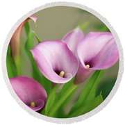 Round Beach Towel featuring the photograph Soft Pink Calla Lilies by Byron Varvarigos