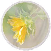Soft Yellow Sunflower Just Starting To Bloom Round Beach Towel