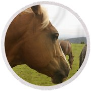 Sorrel Horse Profile Round Beach Towel by Belinda Greb