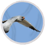 Southern Pale Chanting Goshawk In Flight Round Beach Towel