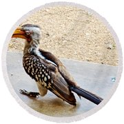 Southern Yellow-billed Hornbill In Kruger National Park-south Africa Round Beach Towel