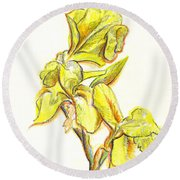 Spanish Irises Round Beach Towel by Kip DeVore
