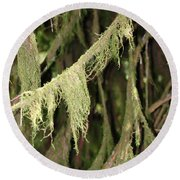 Spanish Moss In Olympic National Park Round Beach Towel by Connie Fox