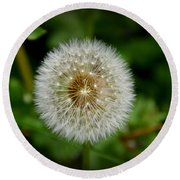 Round Beach Towel featuring the photograph Sparkling Dandelion by Debra Martz