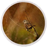 Sparrow In The Bush Round Beach Towel