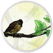 Sparrow On A Branch Round Beach Towel