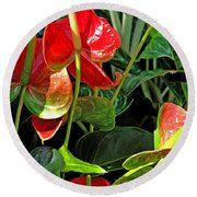 Round Beach Towel featuring the photograph Spathiphyllum Flowers Peace Lily by A Gurmankin
