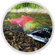 Spawning Sockeye Salmon, Lake Round Beach Towel