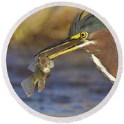Round Beach Towel featuring the photograph Speared by Bryan Keil