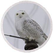 Special Owl Round Beach Towel