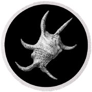 Spider Conch Seashell Round Beach Towel by Jim Hughes