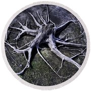 Round Beach Towel featuring the photograph Spider Roots At Manasquan Reservoir by Gary Slawsky