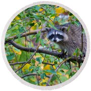 Spokane Raccoon Round Beach Towel by Inge Johnsson