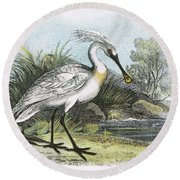Spoonbill Round Beach Towel by English School
