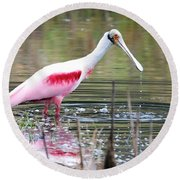 Spoonbill In The Pond Round Beach Towel by Carol Groenen