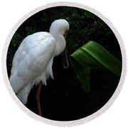 Spoonbill Morning Round Beach Towel