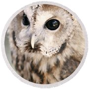 Round Beach Towel featuring the photograph Spotted Owl by Shoal Hollingsworth