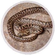 Spotted Python Antaresia Maculosa Round Beach Towel
