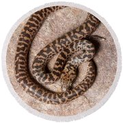 Spotted Python Antaresia Maculosa Top Round Beach Towel