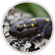 Spotted Salamander Round Beach Towel