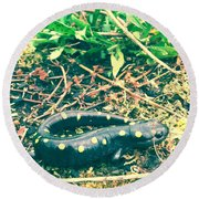 Spotted Salamander Retro Round Beach Towel