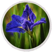 Spring Blue Iris Round Beach Towel