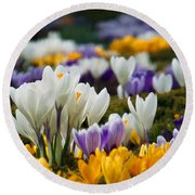 Round Beach Towel featuring the photograph Spring Crocus by Dianne Cowen