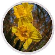 Spring Daffodils  Round Beach Towel