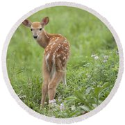 Spring Fawn Round Beach Towel by Jeannette Hunt
