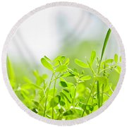 Spring Green Sprouts Round Beach Towel