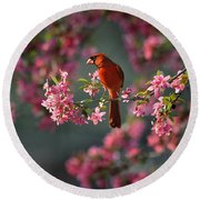 Spring Morning Cardinal Round Beach Towel