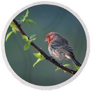 Song Bird In Spring Round Beach Towel by Nava Thompson