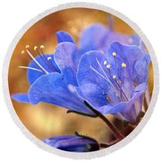 Spring Wildflowers - The Desert Bluebells Round Beach Towel