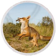 Spring -young Fox Kit Playing With Moss Round Beach Towel