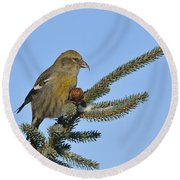 Spruce Cone Feeder Round Beach Towel