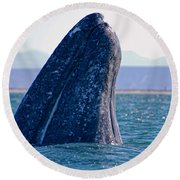 Round Beach Towel featuring the photograph Spyhopping by Don Schwartz