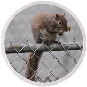 Squirell Snacking On The Fence Round Beach Towel by Dan Sproul