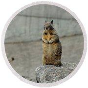 Squirrel At Lover's Point  Round Beach Towel by Susan Wiedmann