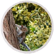 Round Beach Towel featuring the photograph Squirrel by Kate Brown
