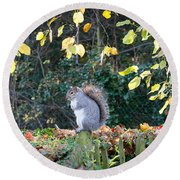 Round Beach Towel featuring the photograph Squirrel Perched by Matt Malloy