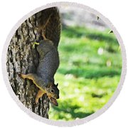 Squirrel With Pecan Round Beach Towel