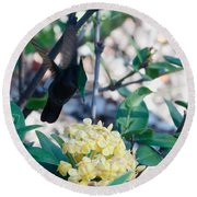 St. Lucian Hummingbird Round Beach Towel