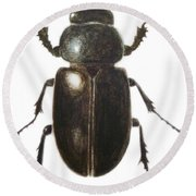 Stag Beetle Round Beach Towel by Ele Grafton