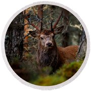 Stag In The Woods Round Beach Towel