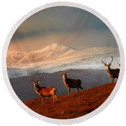 Stags At Strathglass Round Beach Towel