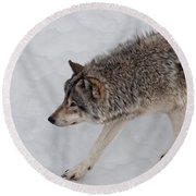 Round Beach Towel featuring the photograph Stalker by Bianca Nadeau