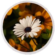Round Beach Towel featuring the photograph Standing Out by James Peterson
